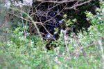 Precipita con l'auto in una scarpata e fa un volo di 50 metri, morta una donna sui Colli Sarrizzo a Messina