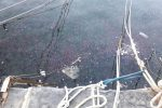 Invasione di meduse al porto di Scilla: milioni di esemplari galleggiano a pelo d'acqua