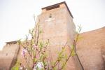 Rimini, in 18mila per Giardini d'autore