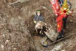 Cessaniti, agnello resta bloccato in una tubazione: salvato dai pompieri