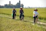 Consorzi irrigui, per contrastare la siccità si torni alla risaia 'tradizionale'