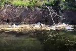Laghi di Faro e Ganzirri a Messina nel degrado, l'appello: siano puliti e sfruttati per il turismo