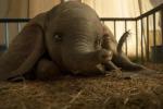 «Dumbo» torna a volare grazie a Tim Burton, le interviste al cast