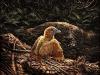 Rappresentazione artistica delluccello preistorico vissuto circa 125 milioni di anni fa (fonte: Julius T Csotonyi / HKU Vertebrate Palaeontology Laboratory)