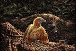 Rappresentazione artistica dell'uccello preistorico vissuto circa 125 milioni di anni fa (fonte: Julius T Csotonyi / HKU Vertebrate Palaeontology Laboratory)