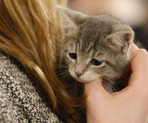 Cina, i giovani scelgono gli animali domestici per combattere la solitudine