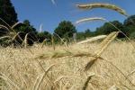 Giornata riciclo: agricoltura prima nell'economia circolare