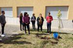 Lamezia Terme, gli studenti piantano una mimosa contro i femminicidi - Foto