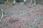 Parco delle Serre, avvistato un raro esemplare di gatto selvatico