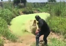L'assalto del coccodrillo: «sente» profumo di carne e balza fuori dall'acqua La scena registrata nei Territori del Nord in Australia - Corriere Tv