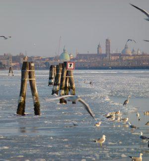 """La Calabria """"esporta"""" la droga nella laguna di Venezia: abbreviato per 18 imputati"""