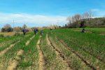 Briatico, scoperti 12 lavoratori in nero: impiegati nella coltivazione della Cipolla rossa di Tropea