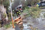 Vento, raffiche di tramontana a Messina: rami caduti e disagi - Foto