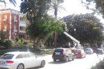 Maltempo in Calabria, a Reggio via ai lavori di messa in sicurezza degli alberi