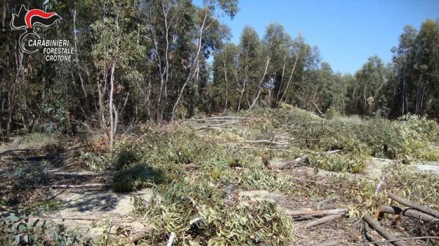 denunciato agricoltore, furto di legna, isola capo rizzuto, taglio abusivo di alberi, Catanzaro, Calabria, Cronaca