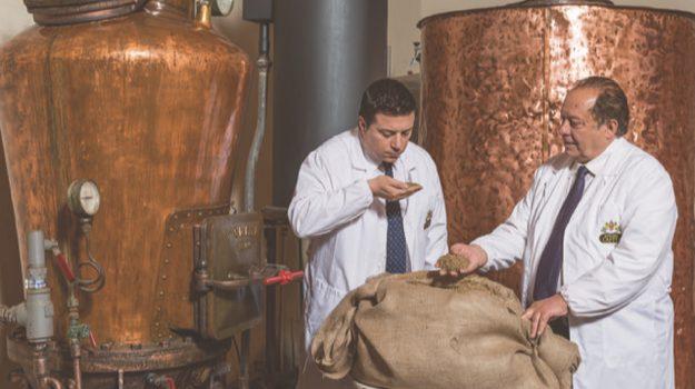 caffo, distilleria, limbadi, mangilli, Catanzaro, Calabria, Economia