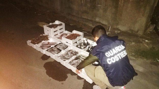 crotone, sanzione, sequestro pesce, Catanzaro, Calabria, Cronaca
