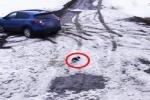 Cane salva il suo amico Chihuahua che sta per essere messo sotto da una macchina
