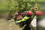 Due cani cadono in una profonda cavità a Roccapalumba, salvati dai vigili del fuoco - Video