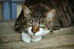 Avvelenata una colonia di gatti a Lipari, la denuncia dell'Enpa