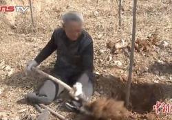 Cina: il settantenne senza arti che ha piantato 17.000 alberi «Lo faccio per le generazioni future» - CorriereTV
