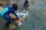 Ferita da un amo da pesca a Pianosa, la tartaruga Olivastra torna libera