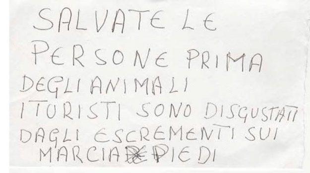 biglietto anonimo, colonia gatti avvelenati, lipari, eleonora zagami, Messina, Sicilia, Cronaca