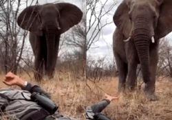 Incosciente o coraggioso? La guida safari si sdraia davanti all'elefante Steve Baillie è una guida naturalistica con oltre 24 anni di esperienza - CorriereTV
