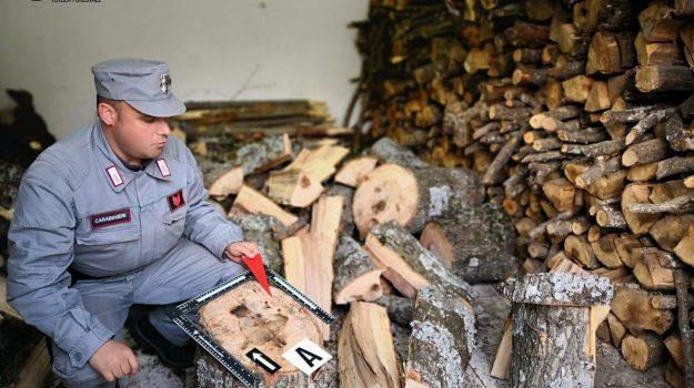 furto legna rossano, Cosenza, Calabria, Cronaca