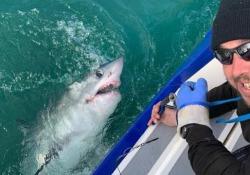 Pesca da paura: all'amo finisce un enorme squalo smeriglio di 250 kg Lo squalo di due metri e mezzo è stato catturato al largo della Cornovaglia dopo due ore di combattimento - CorriereTV