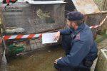 Merli, cornacchie e ghiandaie in casa senza autorizzazione: una denuncia a Malvito