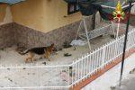 Scoppia un incendio in casa a Scalea e il cane resta intrappolato, salvato dai pompieri