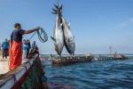 Pesca in Sicilia, 30 giorni di fermo dall'1 settembre al 2 ottobre