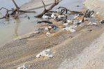 I rifiuti della vecchia discarica dell'Angitola chiusa tantissimi anni fa e riesumata dalle mareggiate