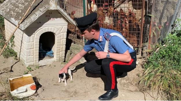 animali, carabinieri, casabona, Catanzaro, Calabria, Cronaca