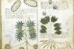 Decifrato il codice del manoscritto Voynich, il testo più misterioso al mondo
