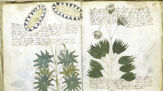 manoscritto voynich, Sicilia, Cultura