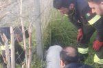 Trappole da bracconaggio per i cinghiali nelle campagne di Lamezia, salvato un cane - Foto