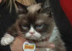 Addio a Grumpy Cat, la gatta amata dal web e imitata da Obama A darne notizia i proprietari sui social: aveva sette anni - LaPresse