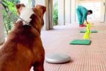 Una clinica per gli amici a 4 zampe: a Enna la dialisi per cani e gatti