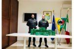 Gioia Tauro, porto della cocaina dal Sud America: nuovo sequestro da 50 chili
