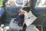 Messina, cane chiuso in macchina sotto il sole: salvato dalla polizia - Foto