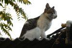 Gatto ucciso nella palestra di Gioia Tauro, il bidello rischia la sospensione