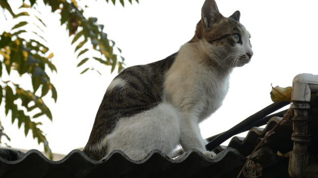 gatto ucciso, gioia tauro, scuola bambini, Reggio, Calabria, Cronaca