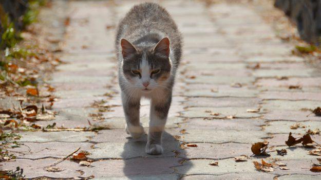gatto, gioia tauro, Reggio, Calabria, Cronaca