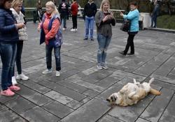 Il cane fiero di essere l'attrazione tra i turisti Alcuni animali sanno esattamente come attirare la folla - CorriereTV