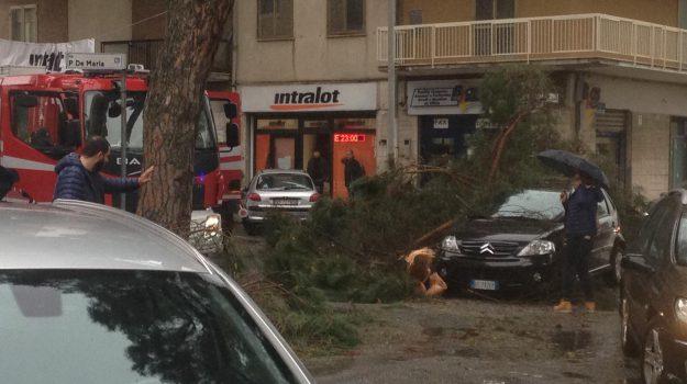 maltempo calabria, ramo spezzato, traffico vibo valentia, Catanzaro, Calabria, Cronaca