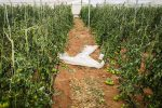 Coltivazioni distrutte e voragini sulle strade, la Sicilia fa la conta dei danni per il maltempo