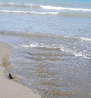 """Mare non balneabile a Reggio, Forza Italia attacca l'amministrazione: """"E' inoperosa"""""""