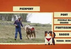Orlando presenta gli amici della fattoria «Parla» il cane pastore protagonista del programma di DeaKids - Corriere Tv